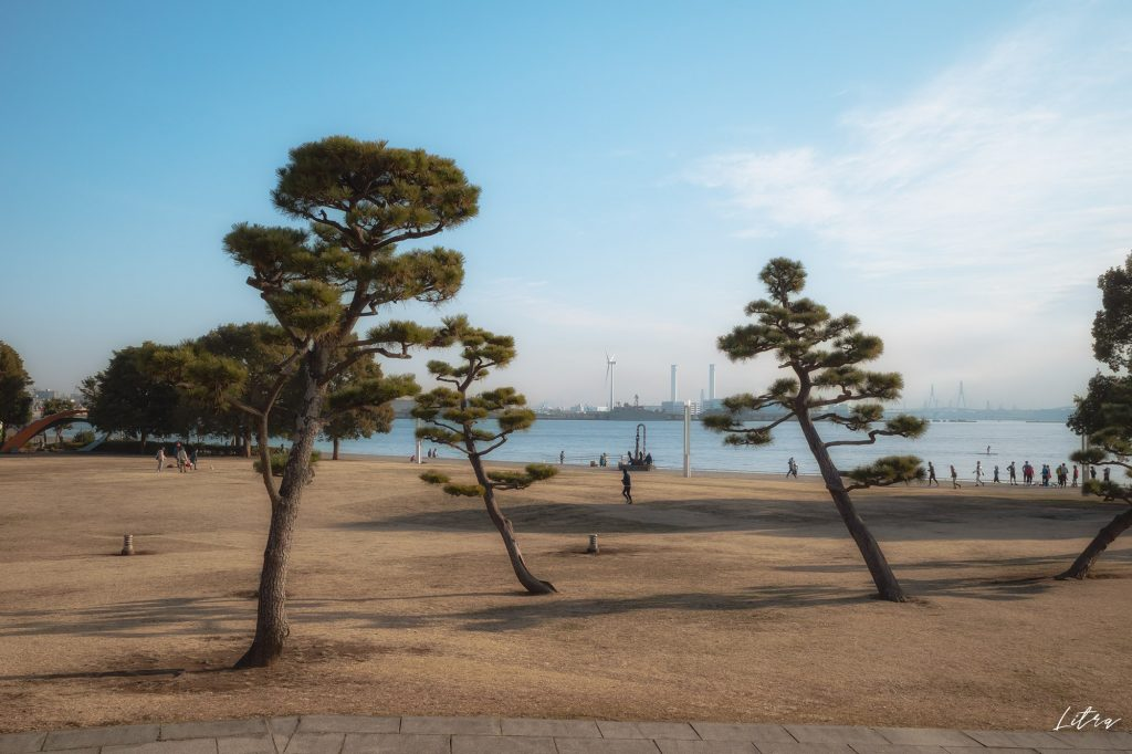 松の木と横浜市風力発電所 ハマウィング