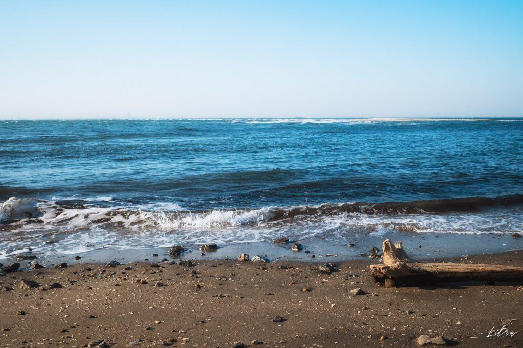 流木と海岸